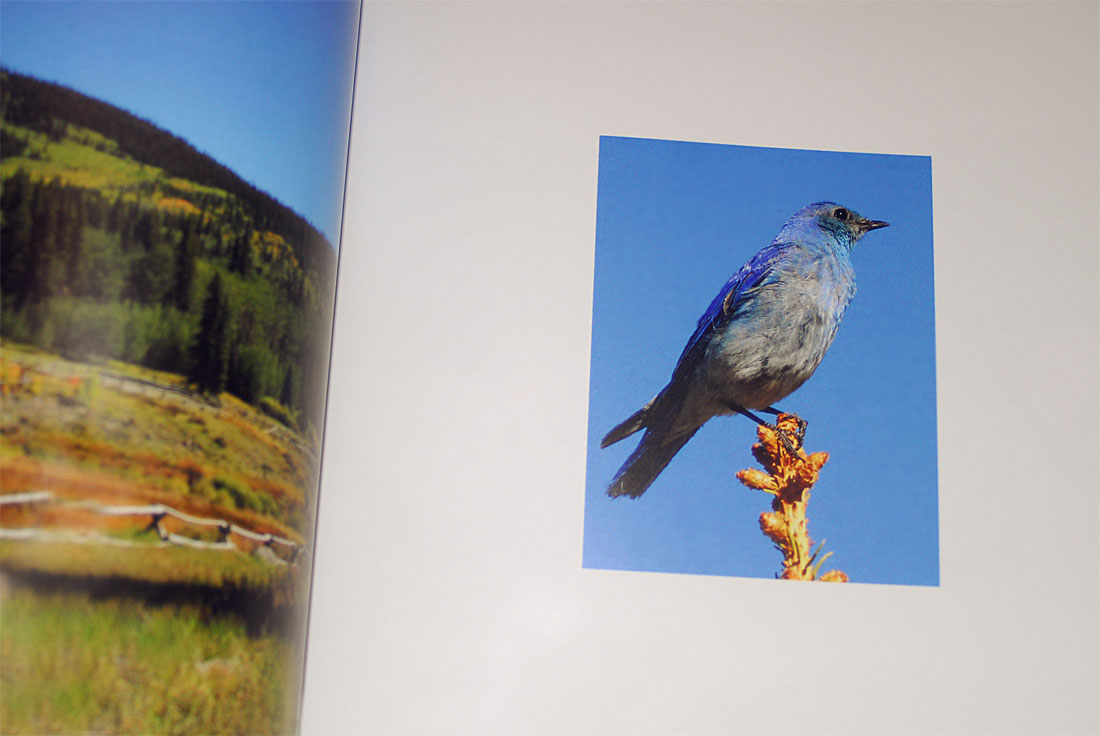 Nature Photography Book Design