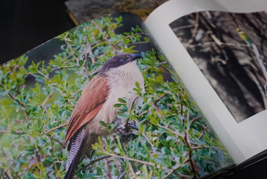 book-design-5